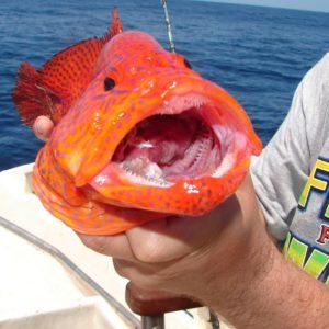 Capo Verde 2006 (16)