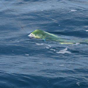Capo Verde 2006 (23)