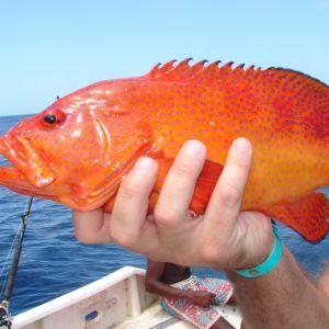 Capo Verde 2006 (13)