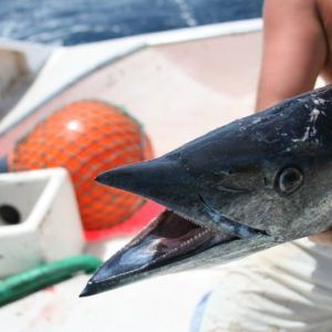 Capo Verde 2006 (29)