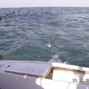 Floryda 2005 (9)