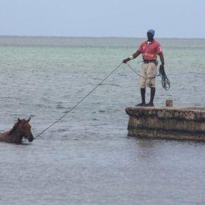 Karaiby 2012 (17)