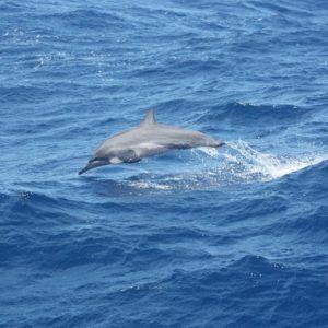 Karaiby 2012 (25)