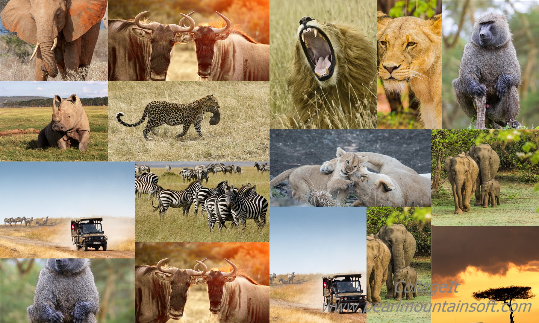 Marzenia się spełniają… : Safari Kenya 2018