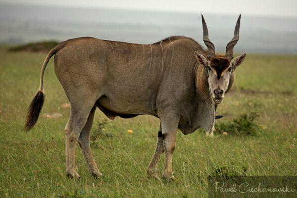 KENIA2018 (62)