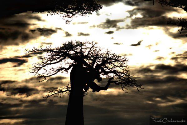 Mission Baobab 2018 (22)