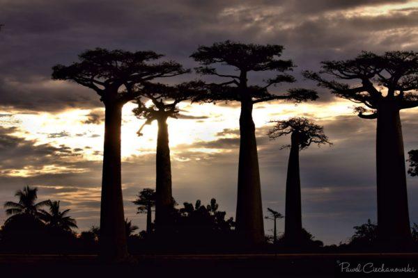 Mission Baobab 2018 (23)