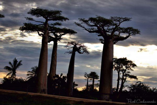 Mission Baobab 2018 (24)