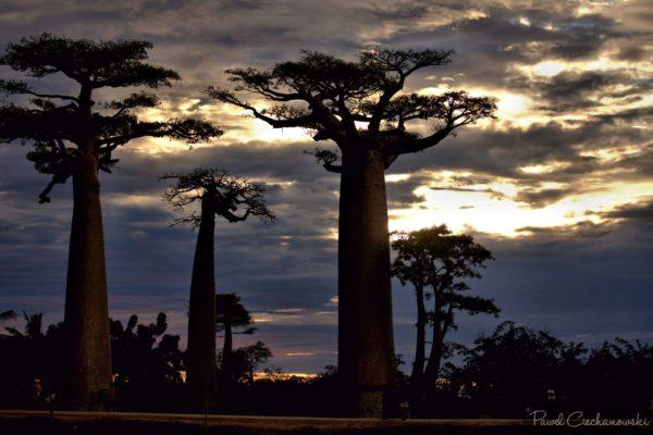 Mission Baobab 2018 (26)