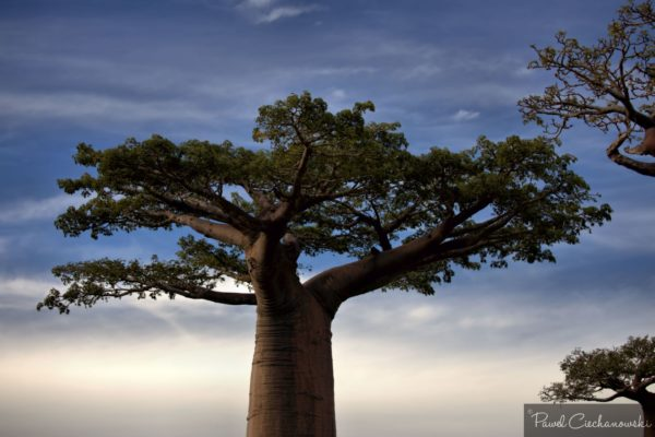 Mission Baobab 2018 (40)