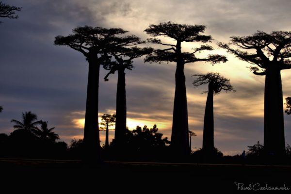 Mission Baobab 2018 (44)