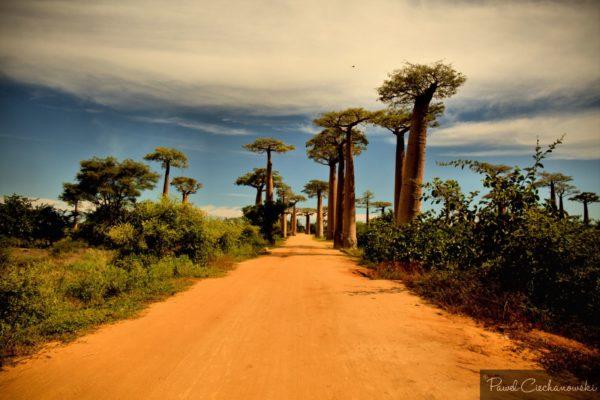 Mission Baobab 2018 (51)