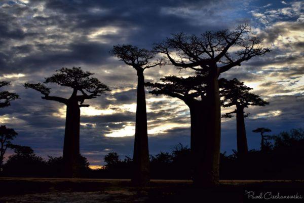 Mission Baobab 2018 (58)