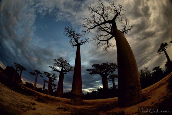 Mission Baobab 2018 (60)