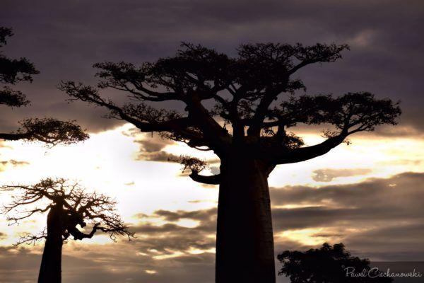 Mission Baobab 2018 (21)