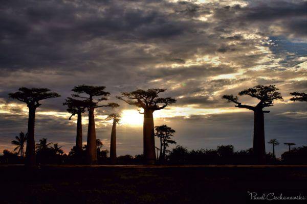 Mission Baobab 2018 (57)