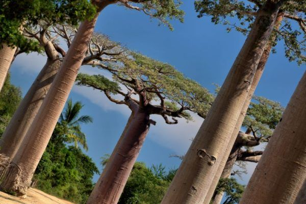 Mission Baobab 2018 (8)