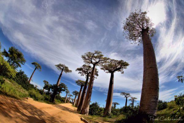Mission Baobab 2018 (9)